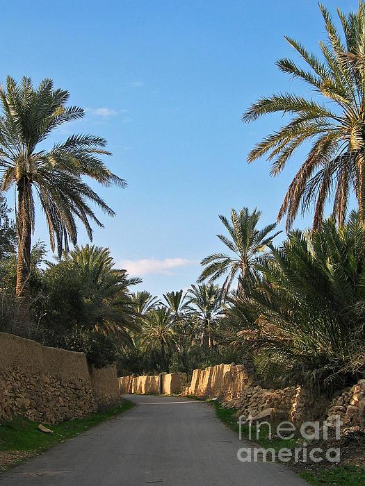 Palm Gardens In Palmyra Oasis Print by Issam Hajjar