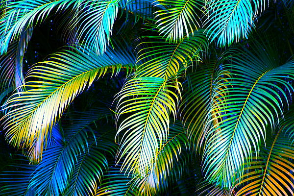 Palm Leaves In Blue Print by Karon Melillo DeVega