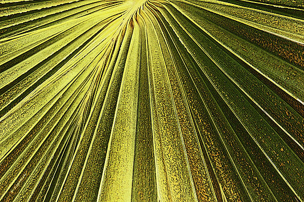 Kerri Ligatich - Palm Patterns I