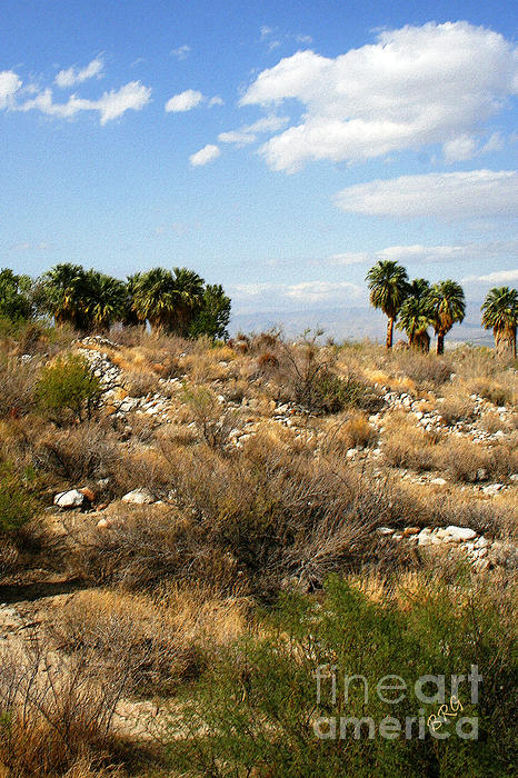 Palm Springs Indian Canyons View  Photograph