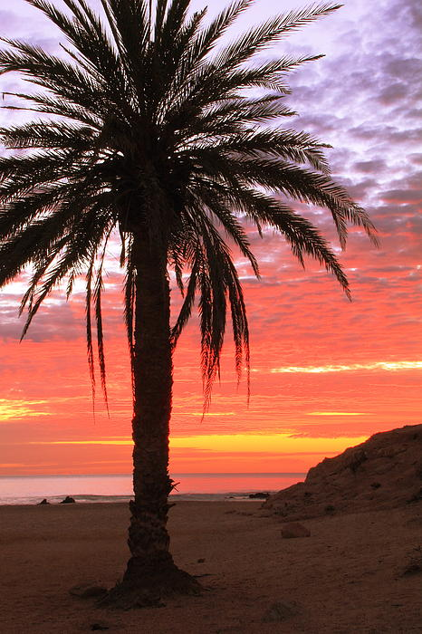 Palm Tree And Dawn Sky Print by Roupen  Baker