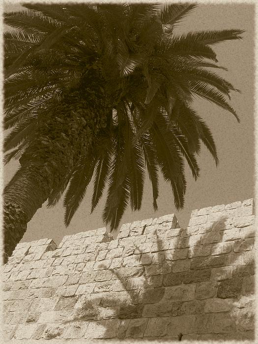 Palm Tree And The Old City -- Antique Photograph  - Palm Tree And The Old City -- Antique Fine Art Print