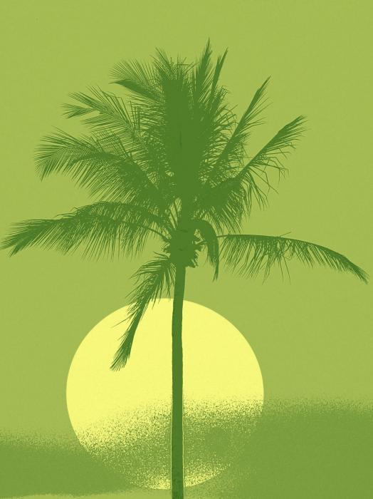 Palm Tree Green Sun Setting By Philip Okoro