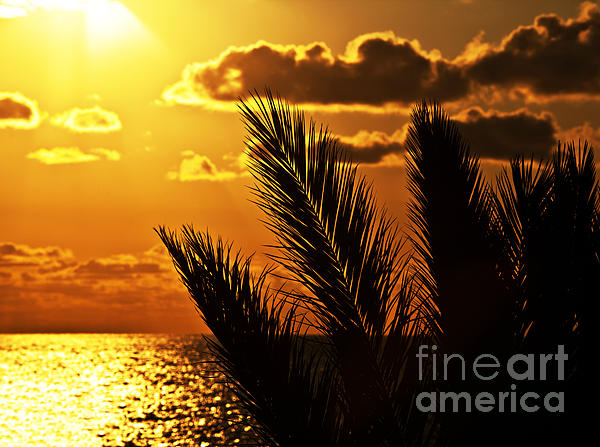 Palm Tree Silhouette At Sunset On The Beach Print by Anna Omelchenko