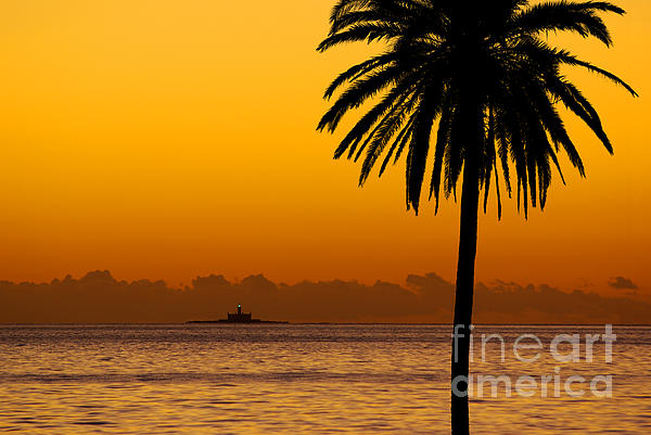 Palm Tree Sunset Print by Carlos Caetano