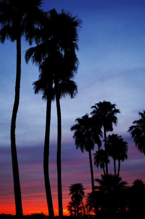 Palm Trees At Sunset Print by Jill Reger