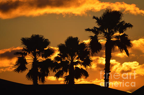 Palm Trees In Sunrise Print by Susanne Van Hulst