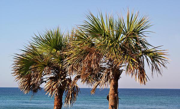 Palm Trees Print by Sandy Keeton