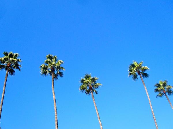 Palms Print by Jon Berry