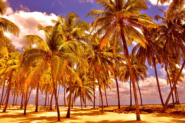 Palms On Half Moon Caye II  Print by Valerie Rosen