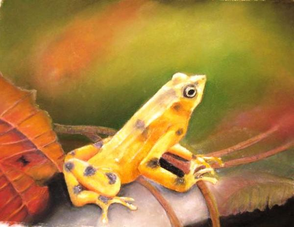 Panamenian Golden Frog Painting