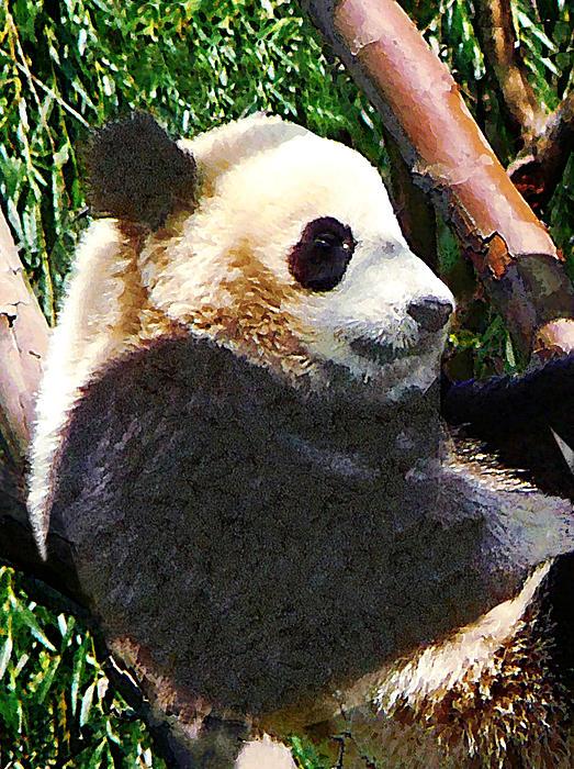 Panda In Tree Print by Susan Savad