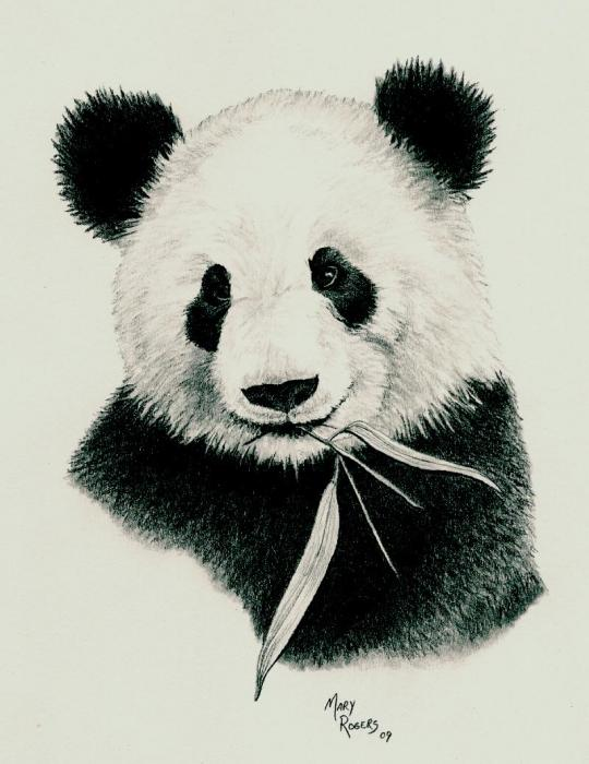 panda-mary-rogers jpgDrawing Of A Cute Panda