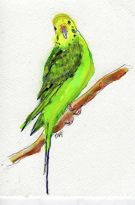 Parakeet Tweedee Painting  - Parakeet Tweedee Fine Art Print