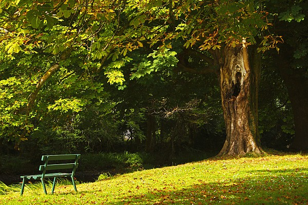 Park Bench Beside The Owenriff River In Print by Trish Punch