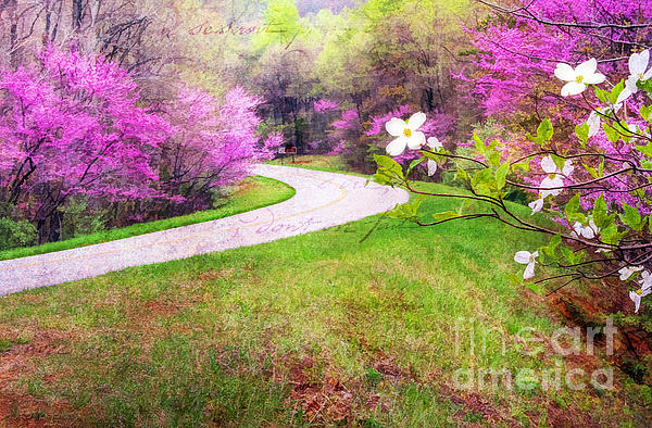 Parkway Kind Of Spring Print by Darren Fisher
