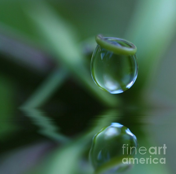 Passion Drop Print by Kym Clarke