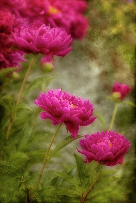 Robin Webster - Passion for Pink