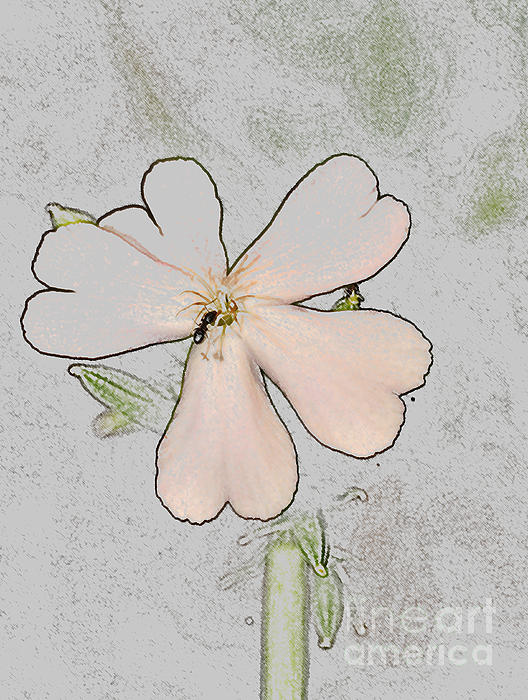 Ginger Harris - Pastel Flower