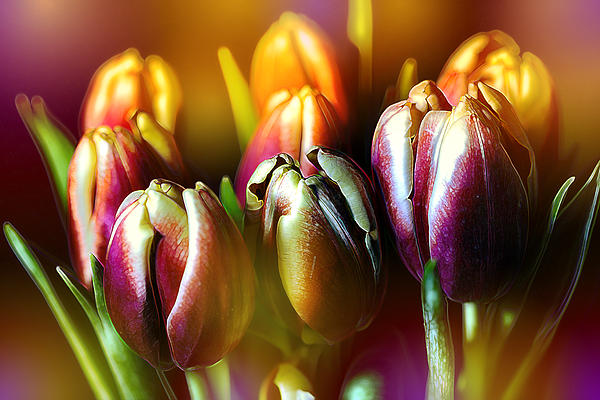 Bill Tiepelman - Pateline Tulips