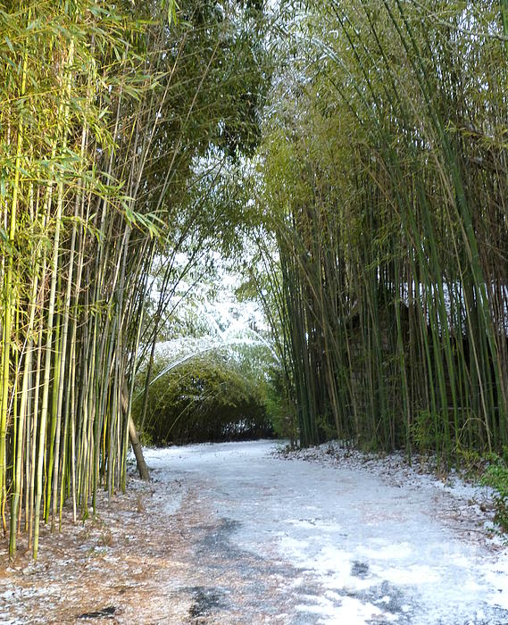 Path In Bamboo Field Print by Renee Trenholm