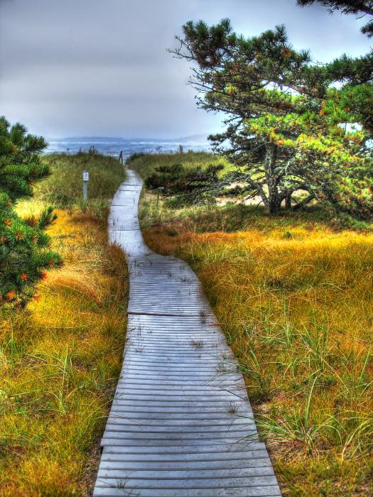 Path To Bliss Print by Tammy Wetzel