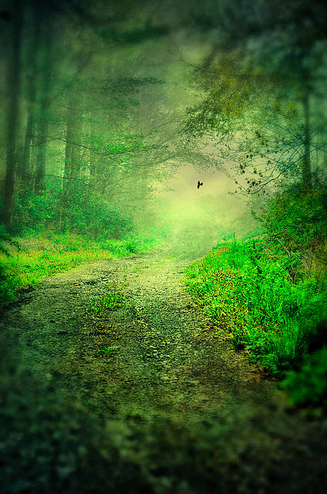 Emily Stauring - Pathway Of Green