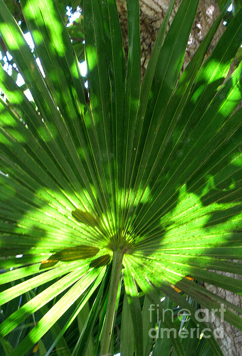 Pattern of Green Photograph