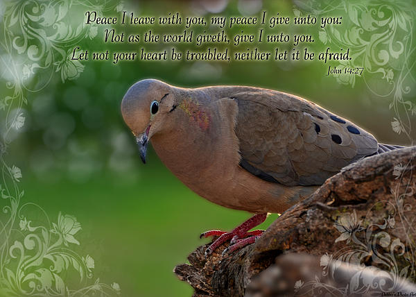 Debbie Portwood - Peaceful Moning Dove greeting card size with verse