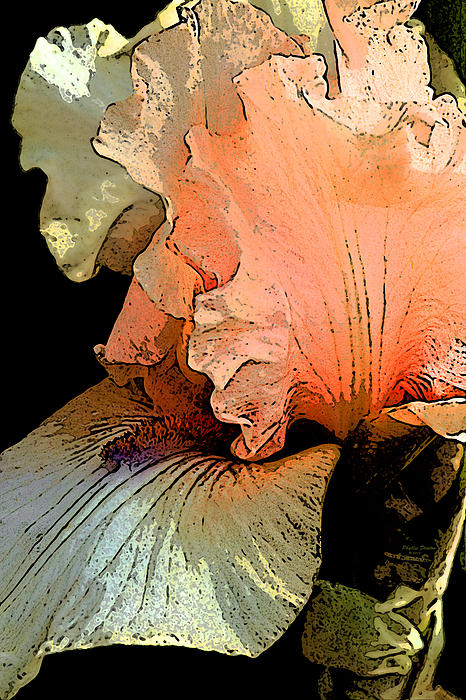 Phyllis Denton - Peach Iris Digital Art