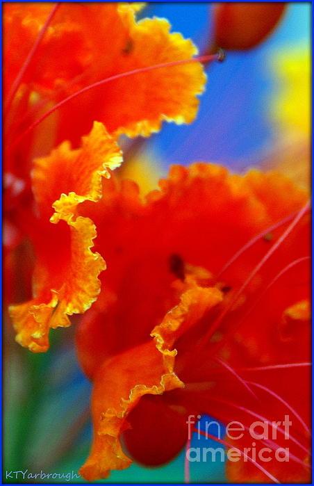 Kim Yarbrough - Peacock Flower