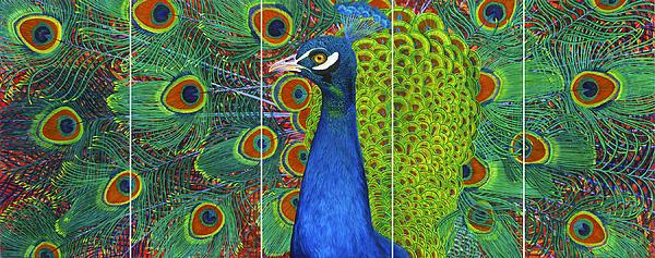 Lisa Rodriguez - Peacock Pride
