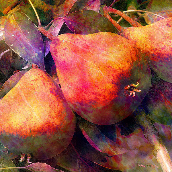 Barbara Berney - Pears