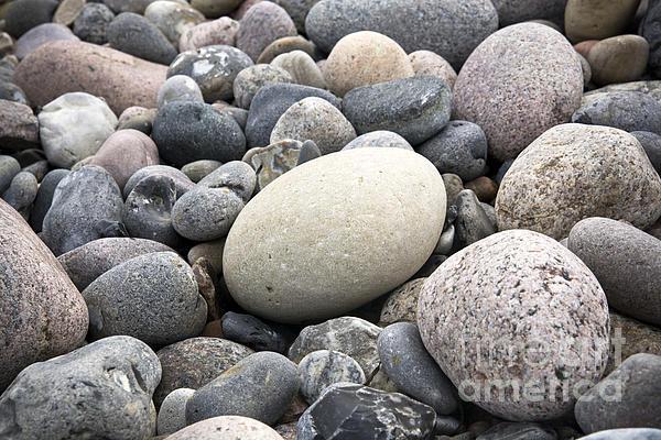Pebbles Print by Frank Tschakert