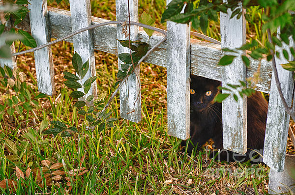 Jeanne  Woods - Peeking though the Fence