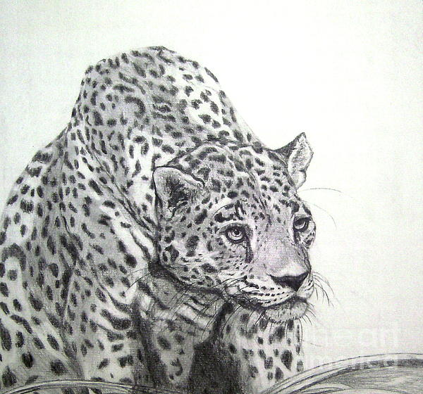 Nancy Rucker - Peering leopard  II