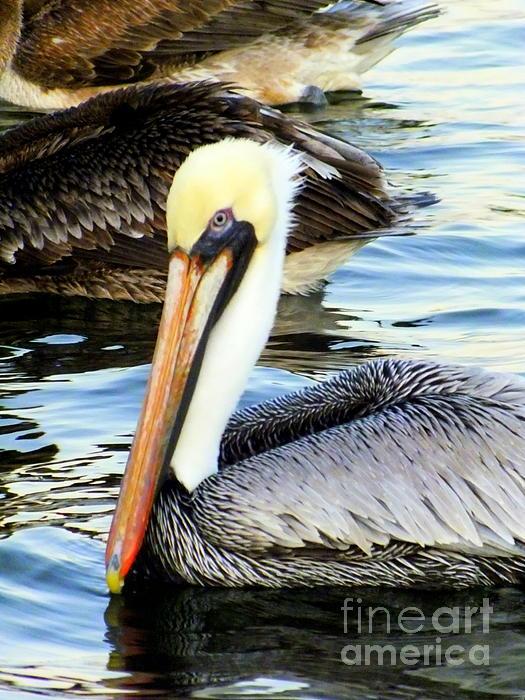 Pelican Pete Print by Karen Wiles