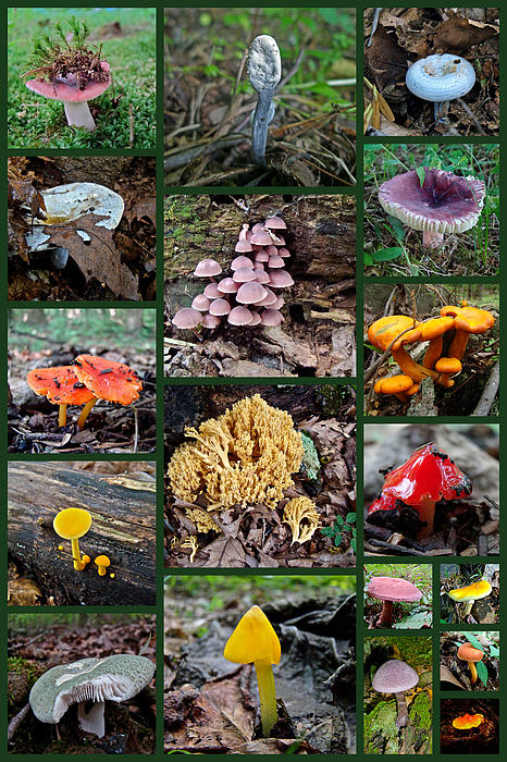 Pennsylvania Mushrooms Collage 2 Print by Mother Nature