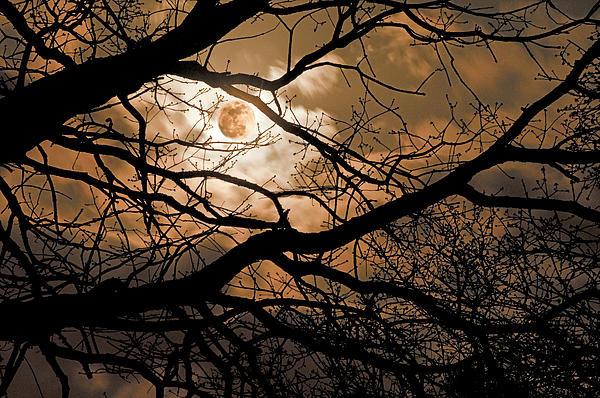 Perigee Moon In The Trees Photograph  - Perigee Moon In The Trees Fine Art Print