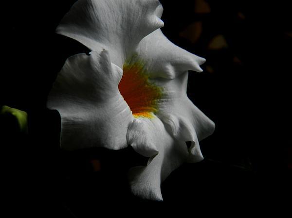 Rebeca Gibson - Petals in the Dust
