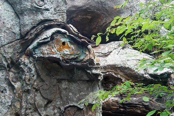 Petrified Prehistoric Monster In Arkansas Print by Douglas Barnett