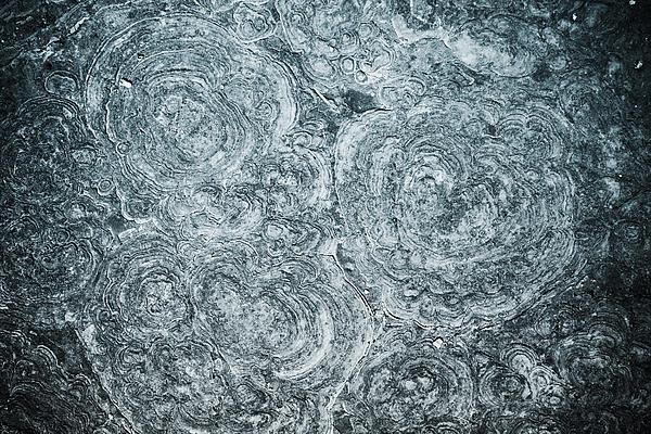 Petrified Sea Floor Print by Ryan Kelly