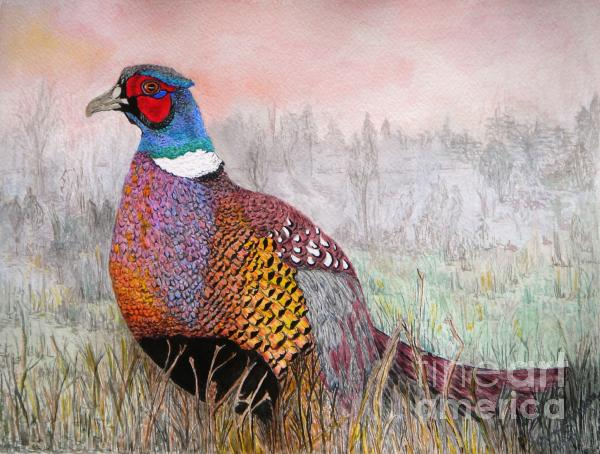 Yvonne Johnstone - Pheasant Dawn
