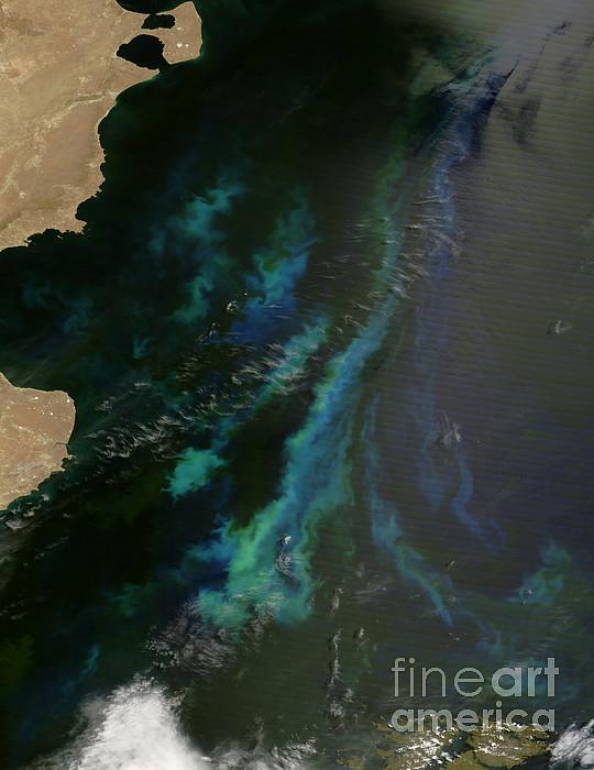 Phytoplankton Off Argentinas Coast Print by Nasa