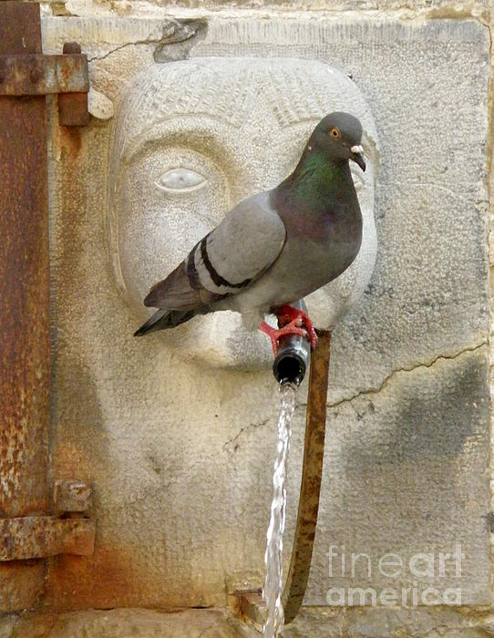 Lainie Wrightson - Pigeon at Fountain Face