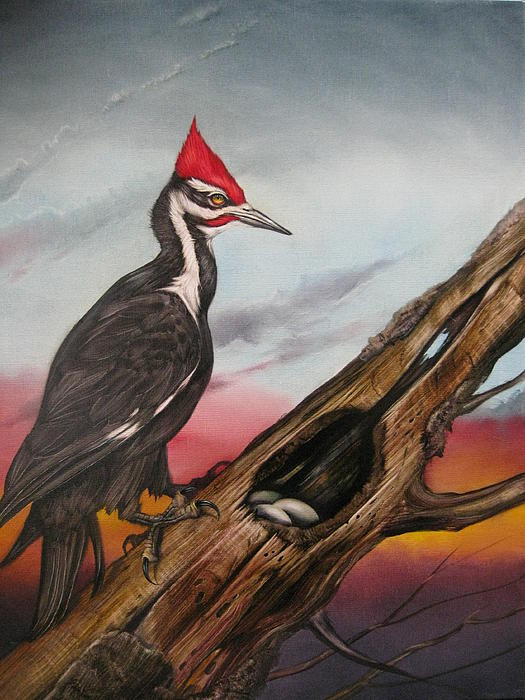 Pileated Woodpecker Painting  - Pileated Woodpecker Fine Art Print