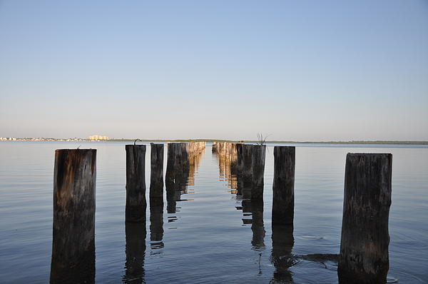 Pilings From An Old Pier Print by Bill Cannon