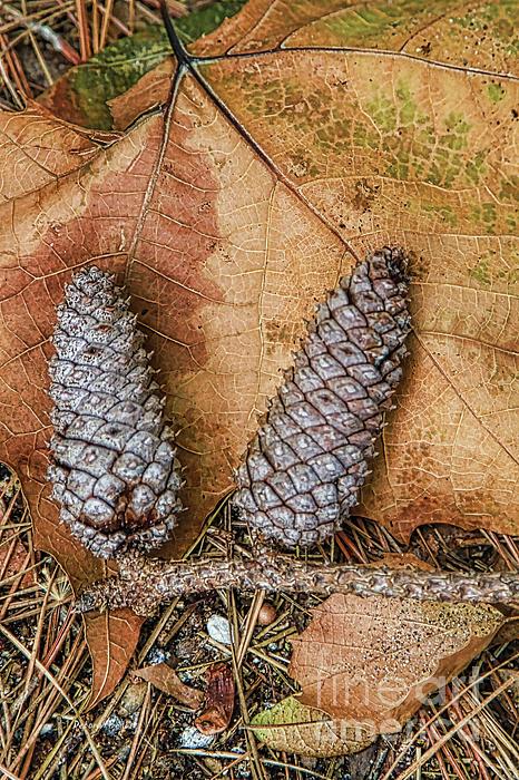 Pine Cones And Leaves Print by Deborah Benoit