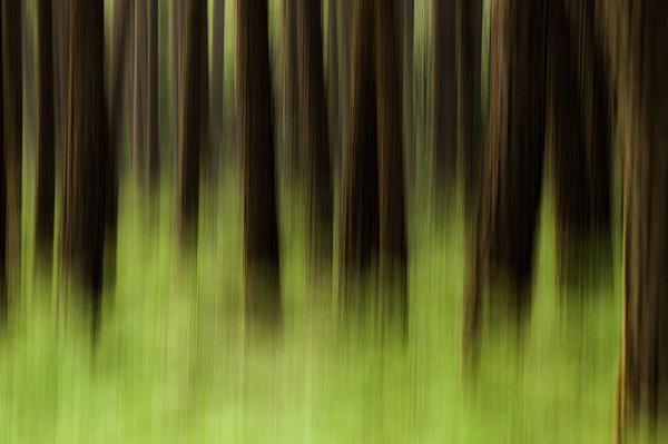Gigi Embrechts - Pine Forest