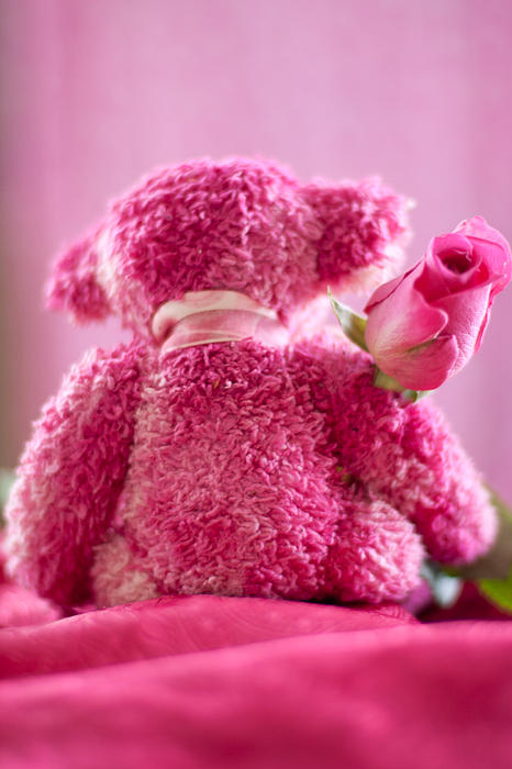 Pink Bear Behind Holding Pink Rose by Ethiriel Photography
